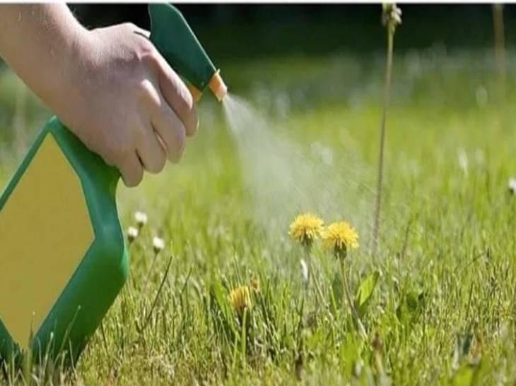 Борьба с тлей народными средствами. сода от тли на смородине: борьба с вредителем помогает ли сода против тли