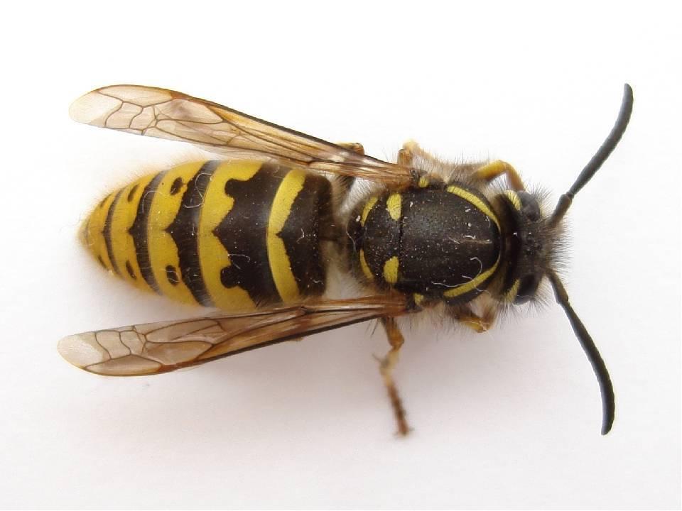 Где зимуют змеи? где зимуют осы, спят ли насекомые в холодный период года? стандартный рацион речных раков