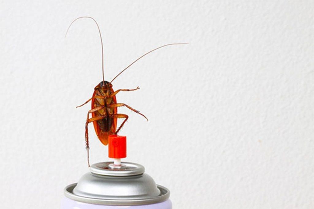 10 видов самой эфективной обработки (травли) тараканов в квартире