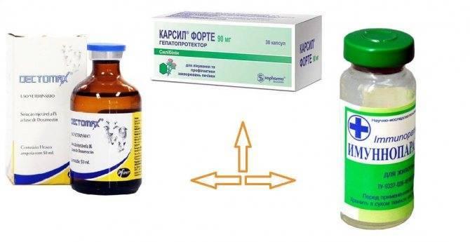 9 лучших средств для лечения демодекоза в домашних условиях