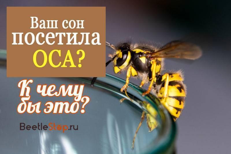 К чему снятся осы и их укусы?