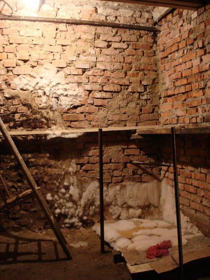Средства для обработки погреба от грибка и плесени