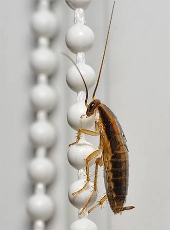 Рацион тараканов: чем питаются, какой у них ротовой аппарат и какие опасности они несут человеку