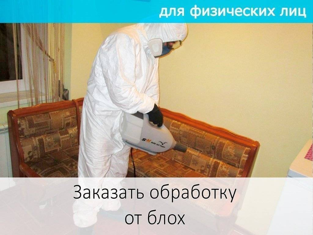 Уничтожение блох в квартире в спб