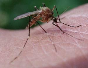 Как комары находят человека даже за несколько километров? как видят комары и что их привлекает к человеку как комары находят человека в темноте.