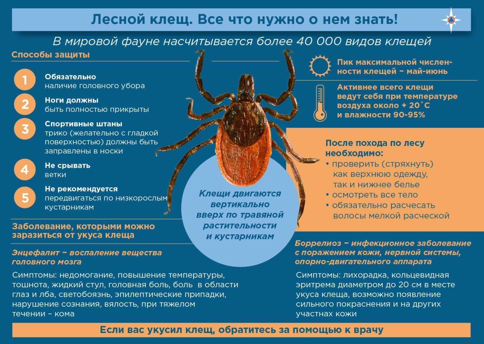 Болезни, которыми можно заразиться от клещей