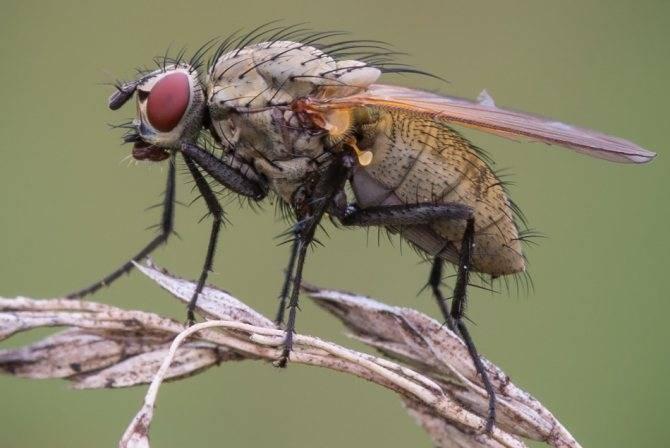 «муха к чему снится во сне? если видишь во сне муха, что значит?»