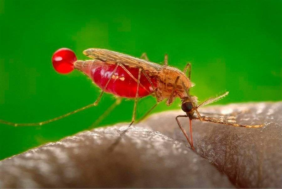 Народное средство от комаров — эффективные варианты