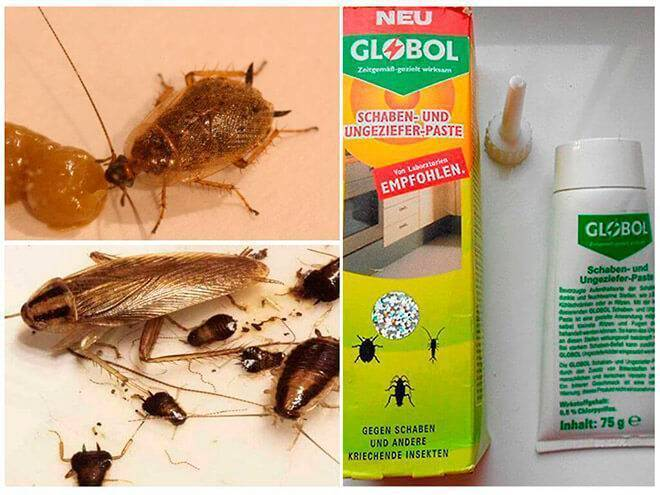 Средство от тараканов глобал (globol) — эффективно ли?