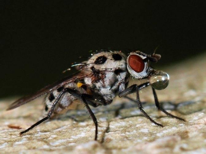 Лосиный клещ как еще называют. опасны ли лосиные вши для здоровья человека? как защититься от укусов клещей