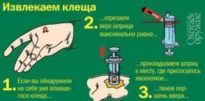 Самые эффективные приспособления для удаления клещей