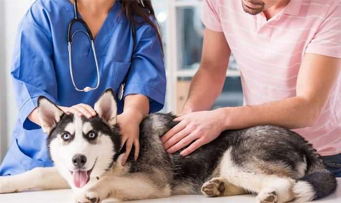 Как достать клеща у собаки самостоятельно