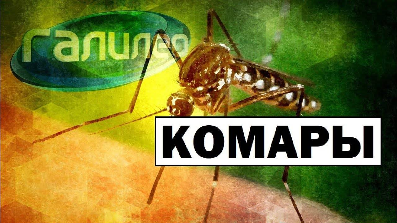 Комар – насекомое-кровопийца. как размножаются комары: особенности, характерные для летающих кровососов как зимуют комары