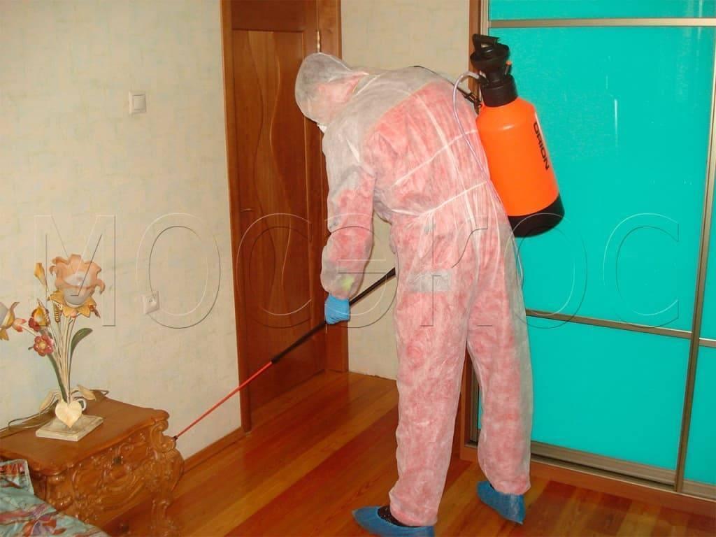 Уничтожение постельных клопов в москве — выбор компании и цены