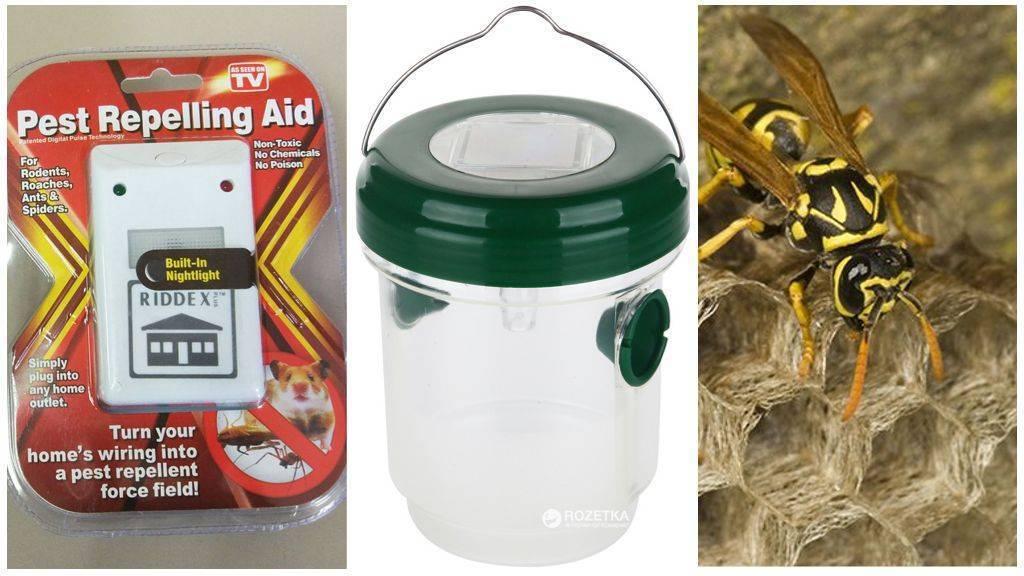 Чего боятся осы: список отпугивающих средств и методов для использования в саду и жилом доме. чем и как отпугнуть ос на природе