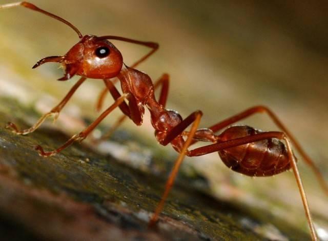 Масса муравьев на земле