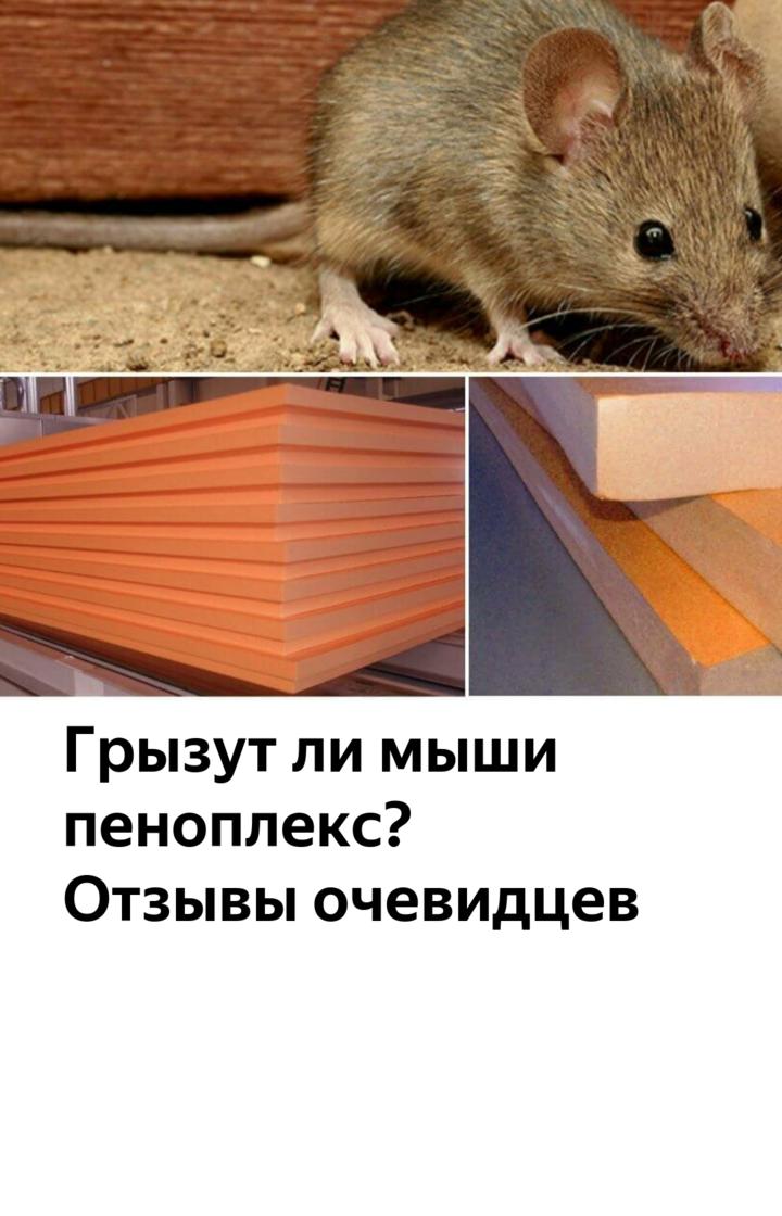 Грызут ли мыши пеноплекс: заблуждения и реальность
