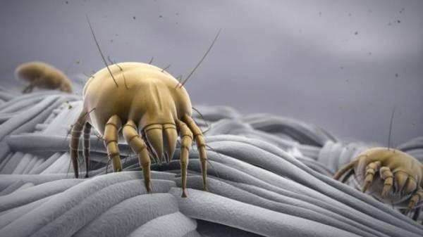 Как избавиться от пылевого клеща в домашних условиях? обзор эффективных способов