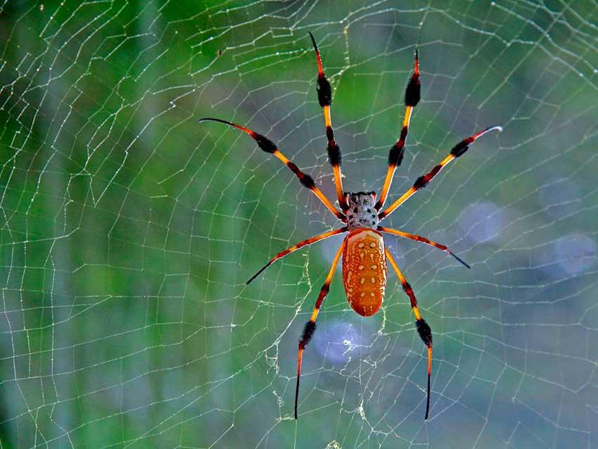 Быть пауком