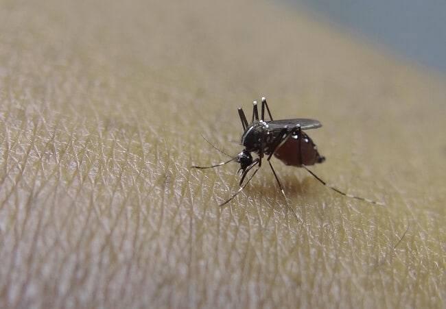 Какие народные средства защитят от комаров