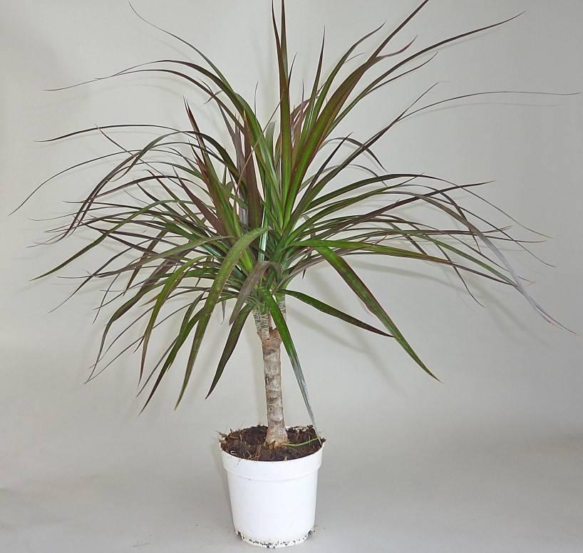 Основные вредители комнатных растений и цветов