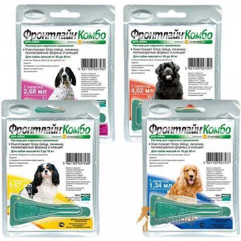 Фронтлайн для собак: виды препаратов и инструкция по применению