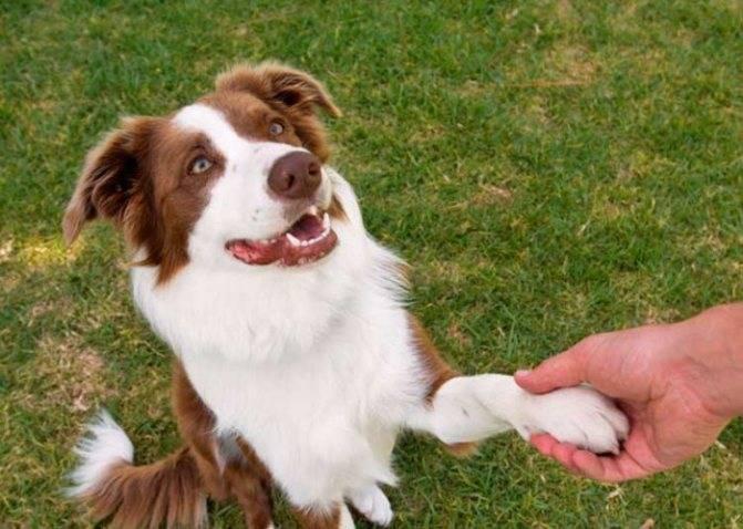 Опасны ли блохи собак для человека