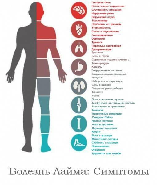 Клещевой боррелиоз: симптомы, лечение и последствия