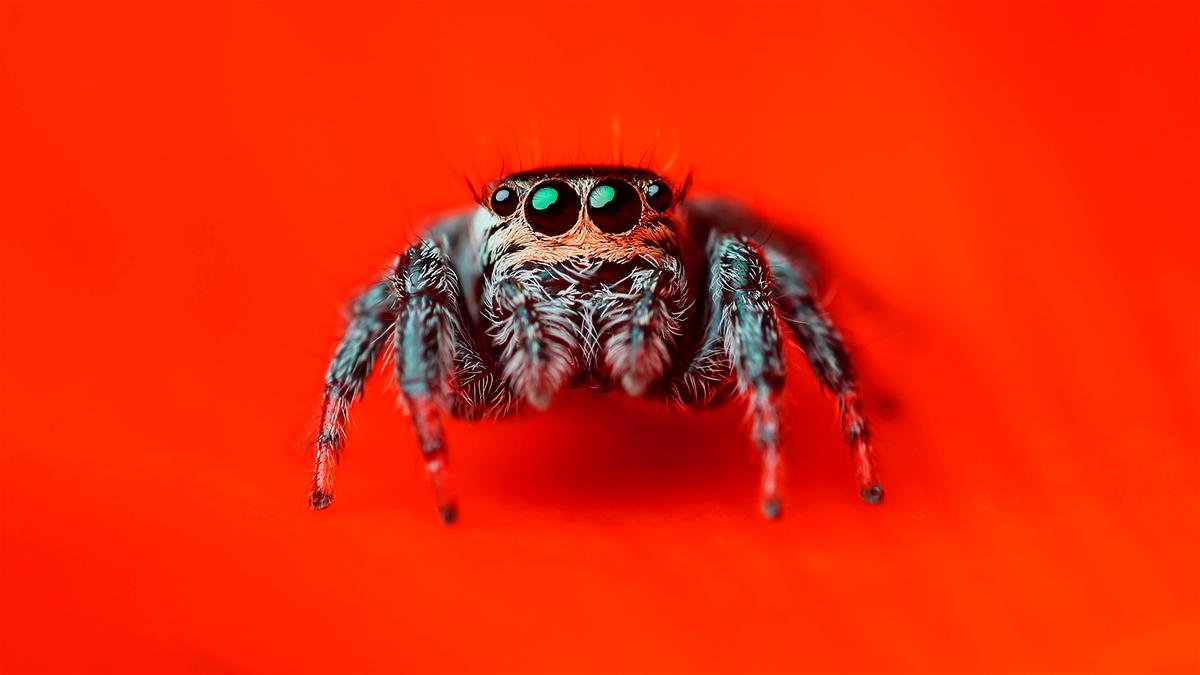 Характеристика класса паукообразных: членистоногие пауки