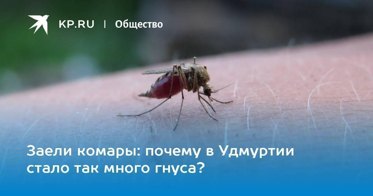 Что делать если комары кусают собаку. что делать, если собаку покусали комары и мошки