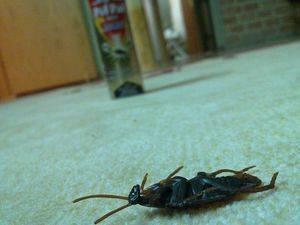 Если у соседей тараканы куда жаловаться