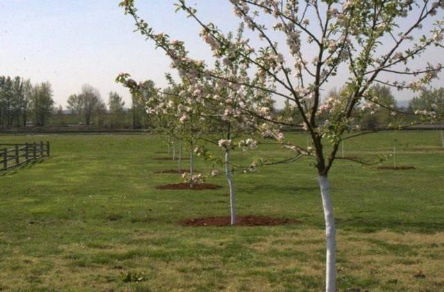 Вредители яблонь с фото и борьба с ними