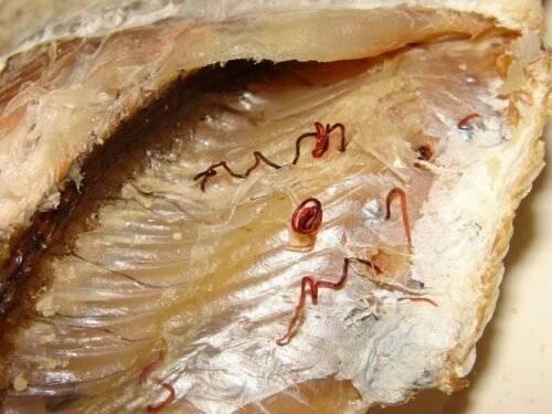Насколько опасны паразиты в рыбе?