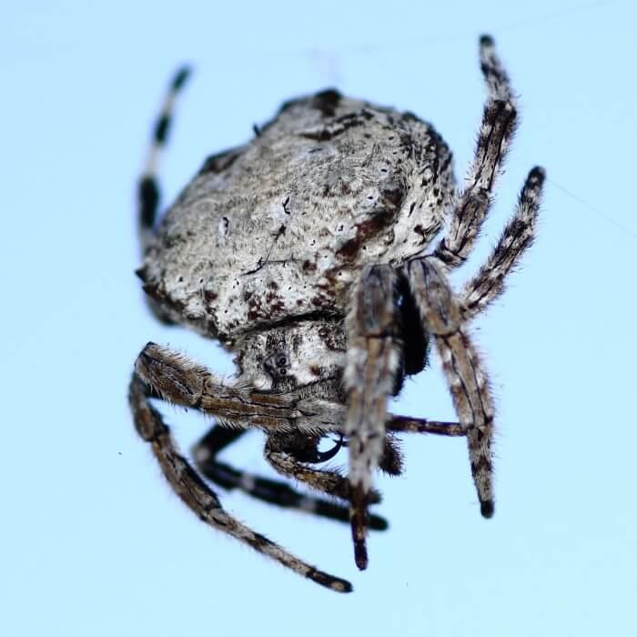Почему пауки плетут паутину? описание, фото и видео
