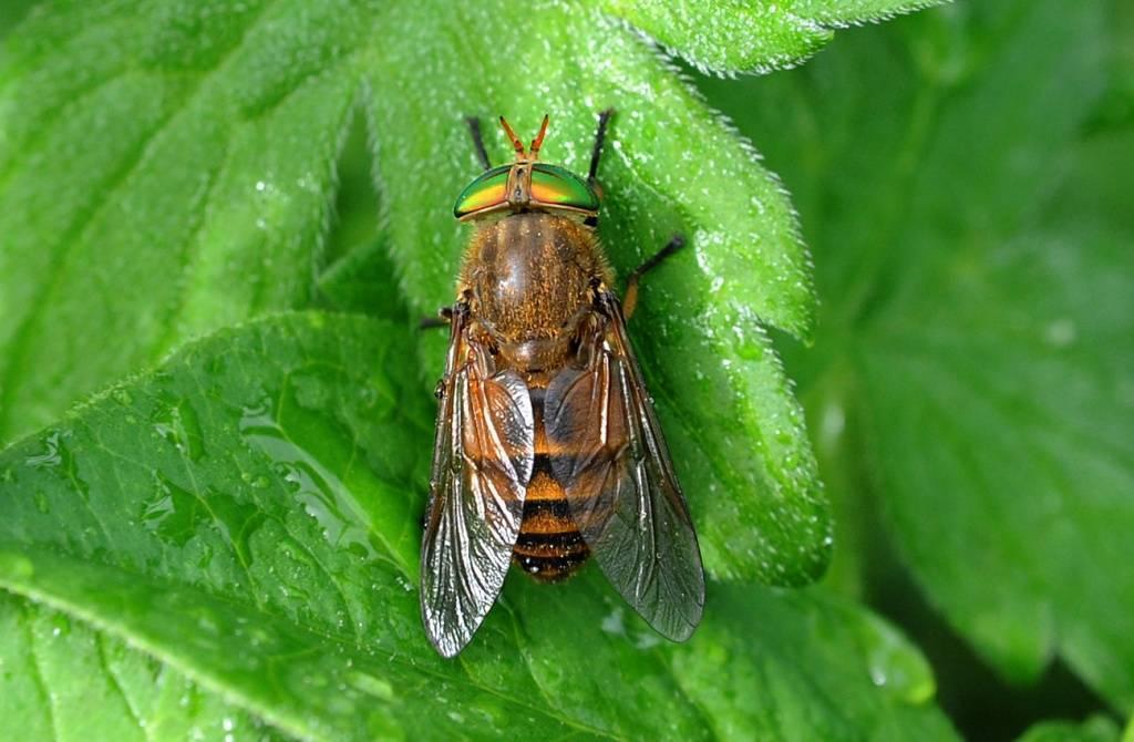 Эффективные методы борьбы с паразитами в организме человека природными средствами