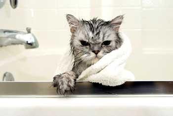 Использование дегтярного мыла для выведения блох у кошек