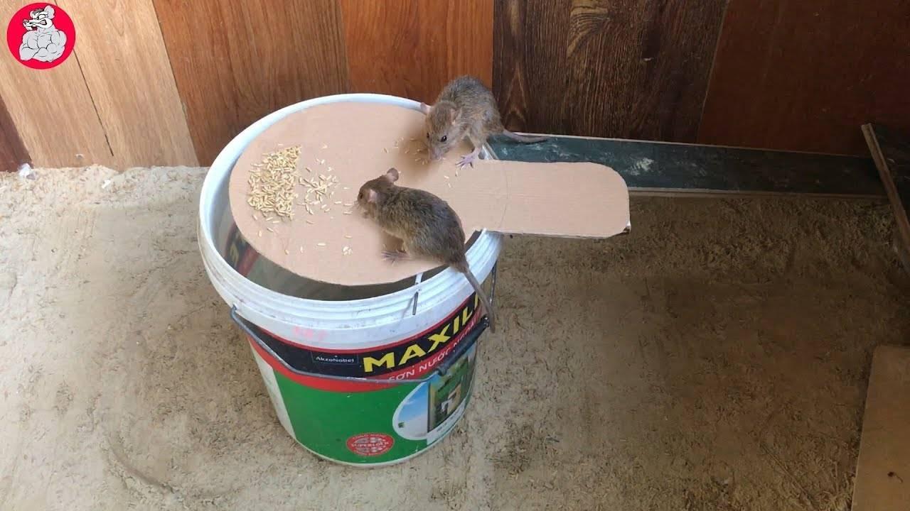 Ловушки и капканы для крыс