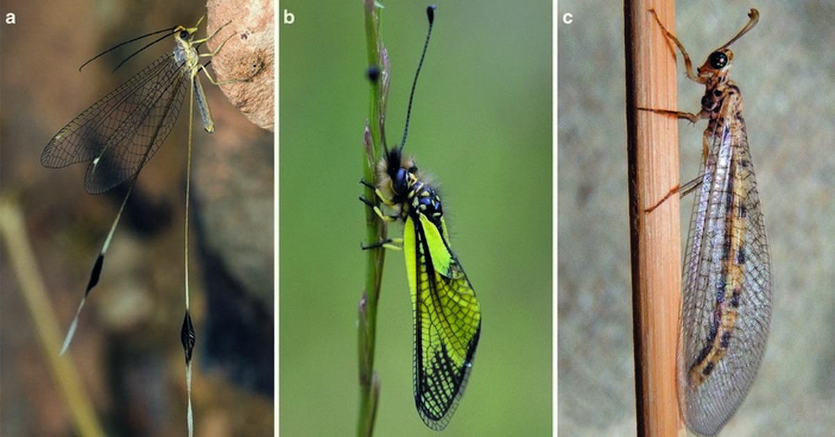 Интересные факты о стрекозах. интересные факты про стрекоз