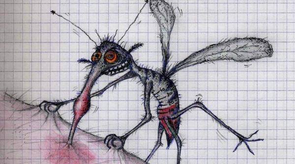 Малярийные комары: цикл развития, как выглядит самка и личинка, последствия укуса