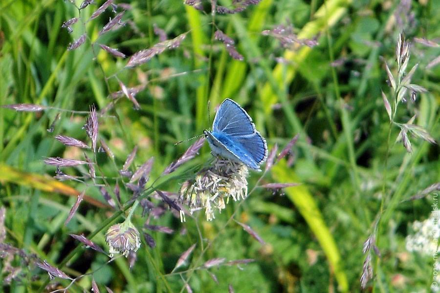 Бабочка голубого цвета фото