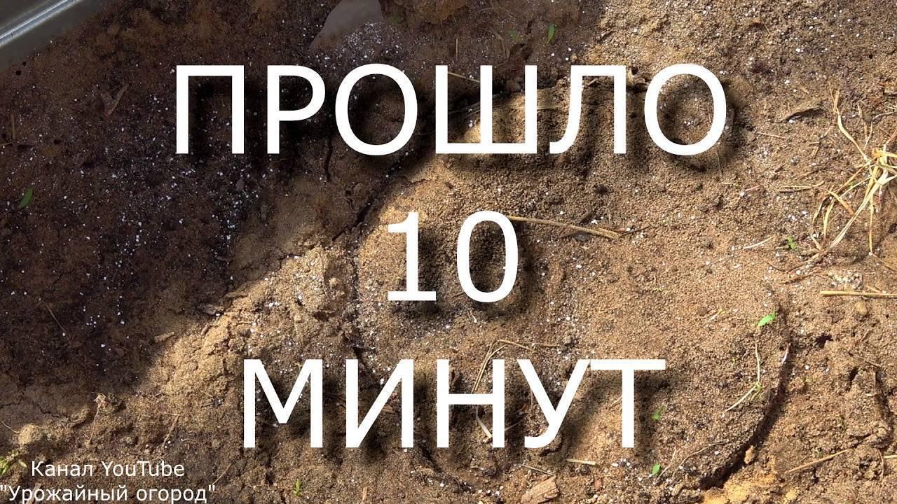 Как можно избавиться от муравьев в теплице с огурцами, что делать для борьбы