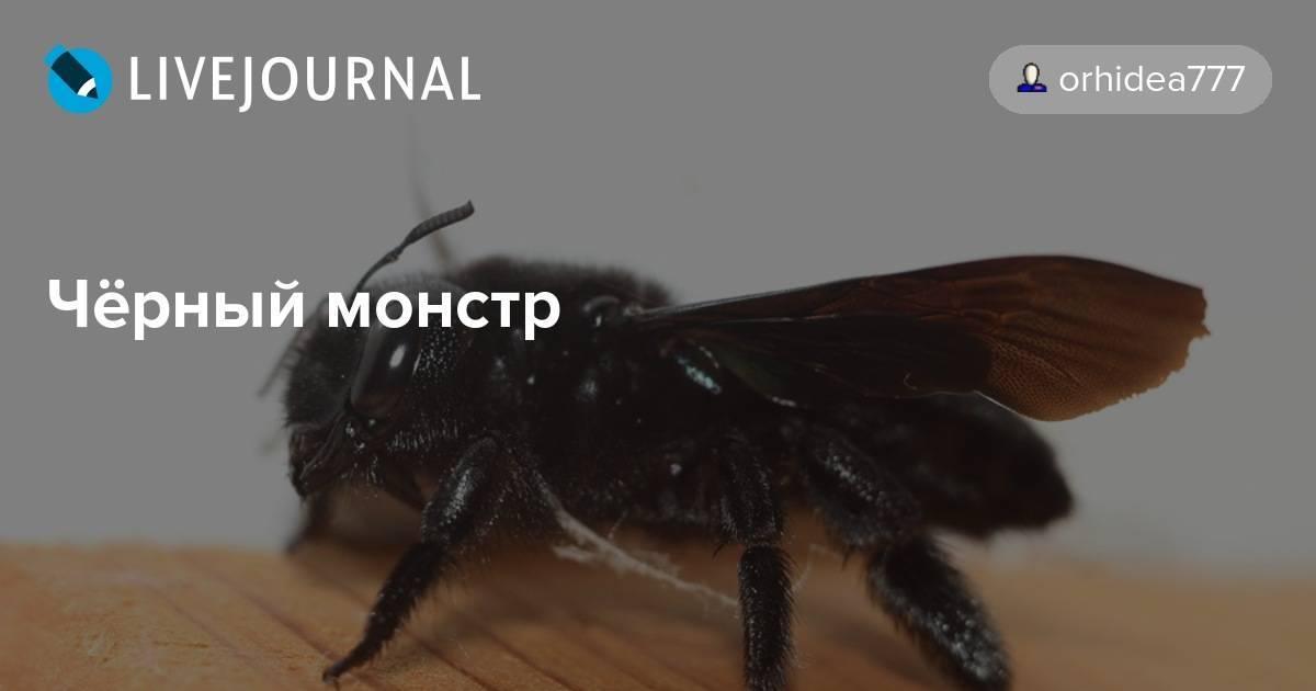 Разновидности черной пчелы