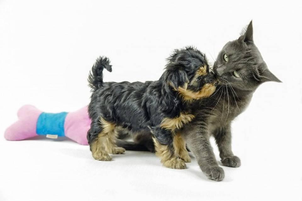 7 способов удалить удалить клеща с кожи собаки в домашних условиях