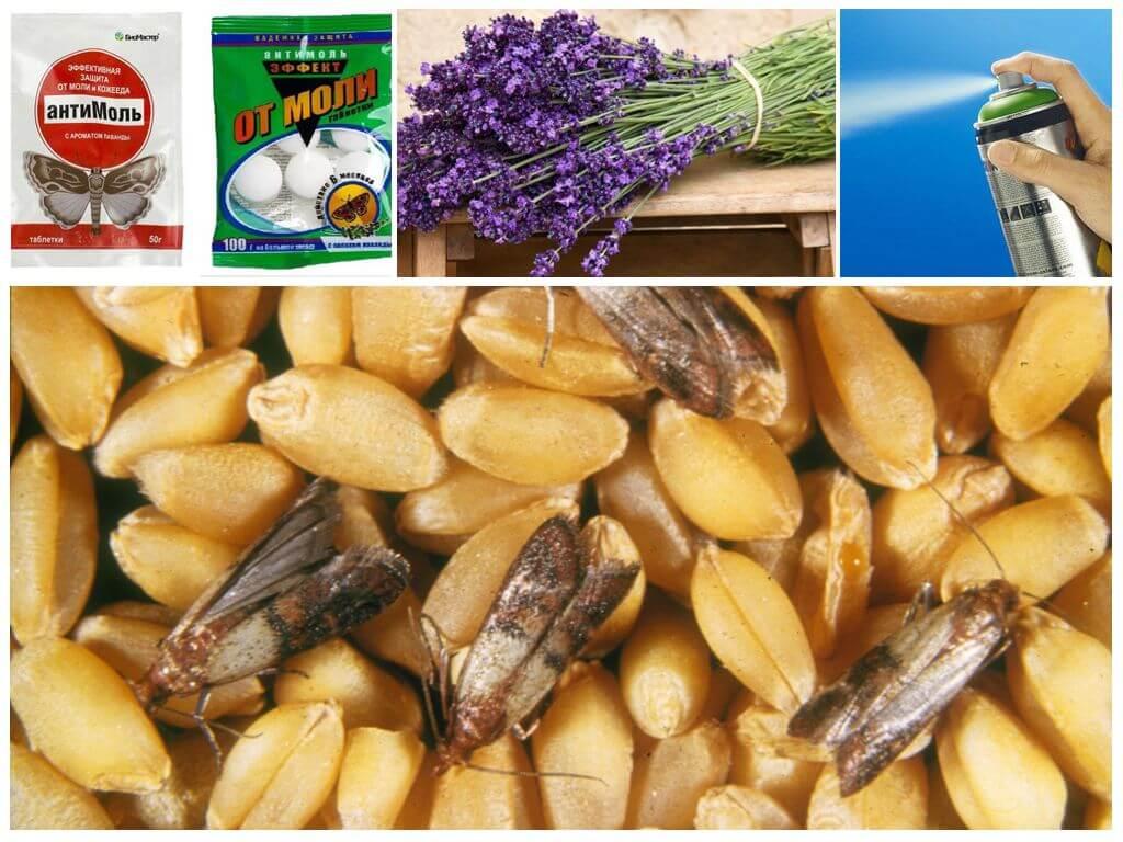 Как избавиться от фруктовой моли и защитить от нее сухофрукты