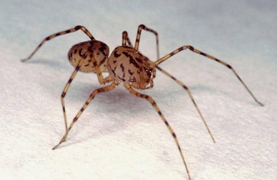 Верные способы избавиться от пауков, поселившихся у вас дома