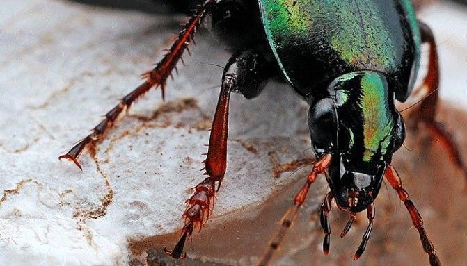 Если во сне приснился майский жук
