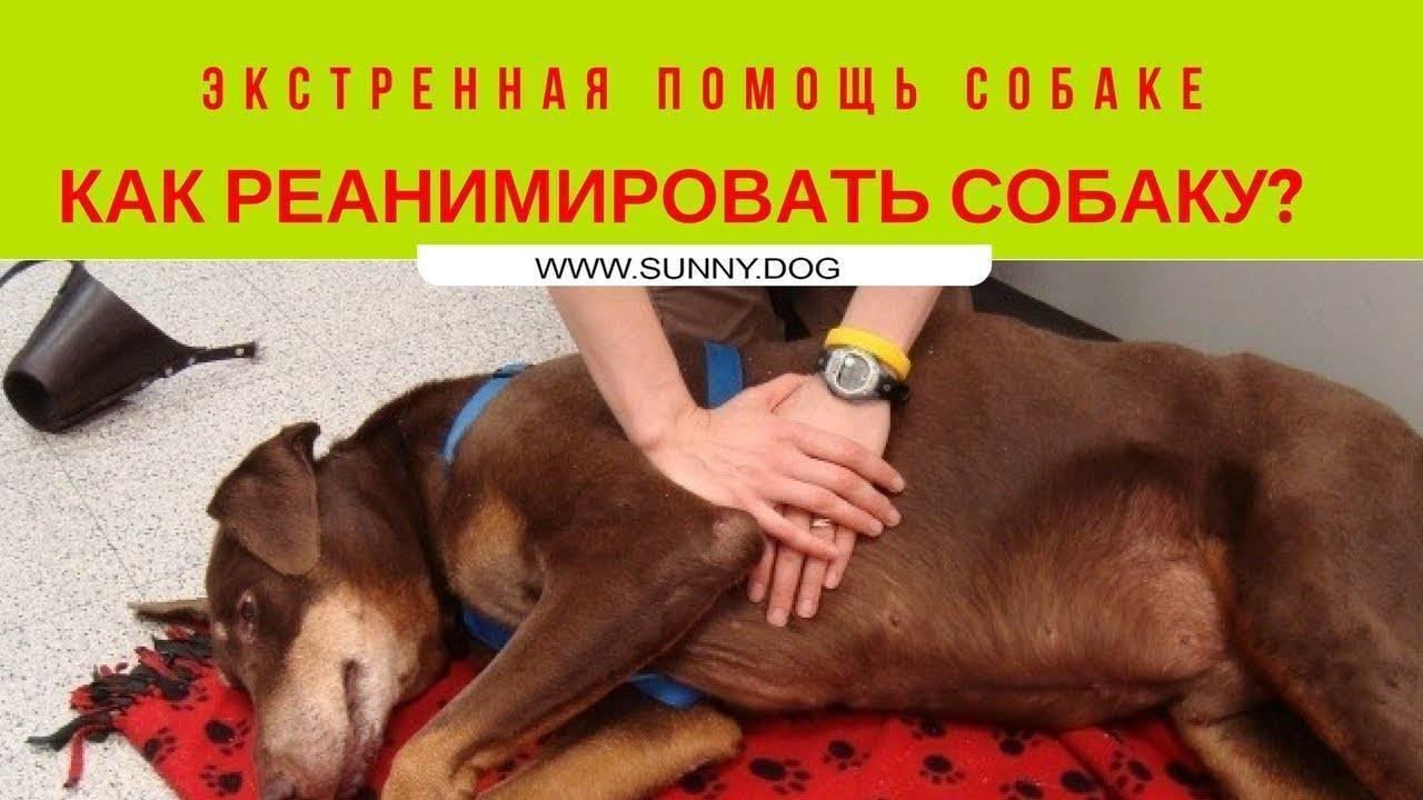 Что делать, если голова клеща осталась в теле собаки
