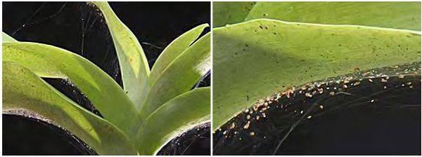 На орхидее появился клещ: причины и способы решения проблемы