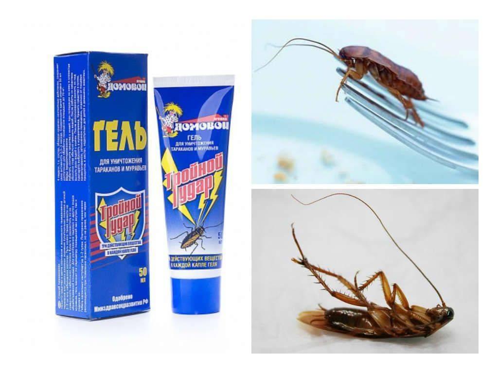 Уничтожение раз и навсегда: как избавиться от тараканов?