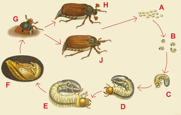 Скорпионы: ареал обитания, строение и внешний вид, образ жизни в природе